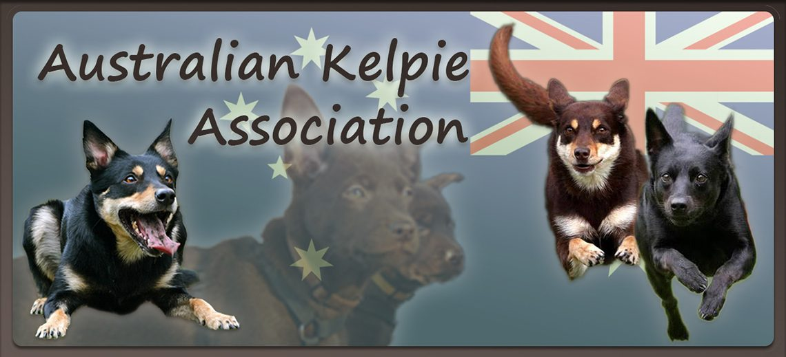 Australian Kelpie Association